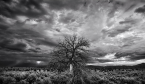 taos tree and storm