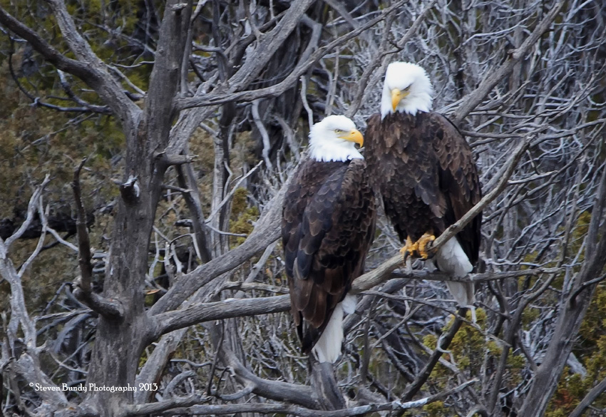American Eagles – Pilar, NM – 2013