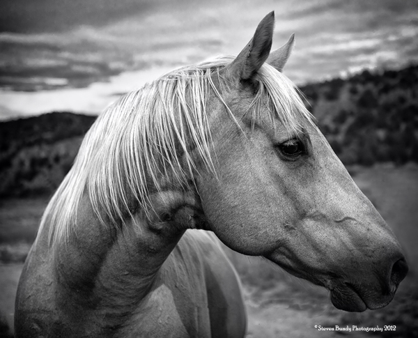 Blond Horse,  La Servalita, New Mexico, 2011