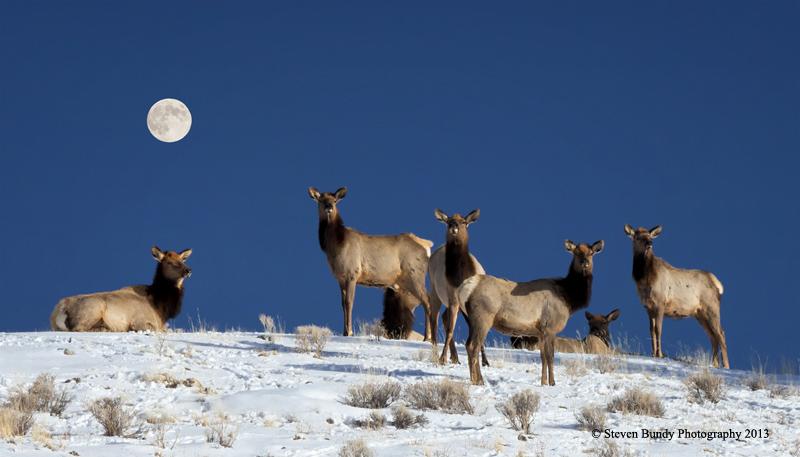 Elk and Full Moon – Eagle Nest, NM – 2013