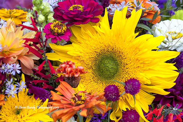 Farmers Market Flowers – Bloomington, IN – 2015