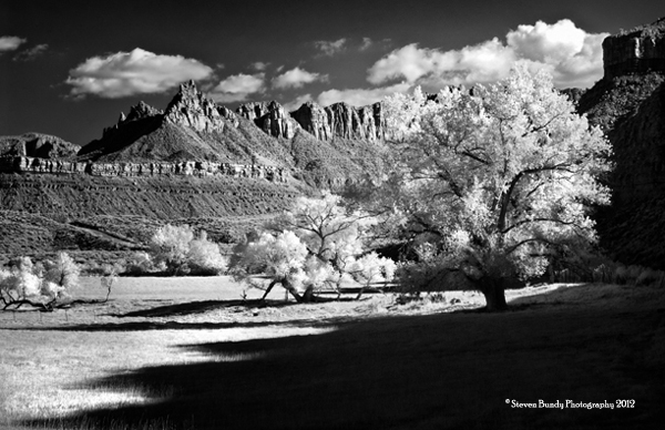 Grafton Road Tree, Utah, 2011