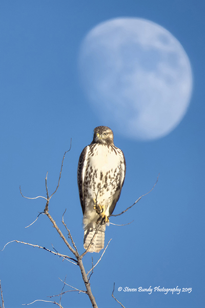 Hawk & Moon – Taos, NM – 2015