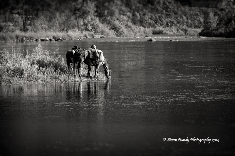Horses on the Rio – Pilar, New Mexico – 2014
