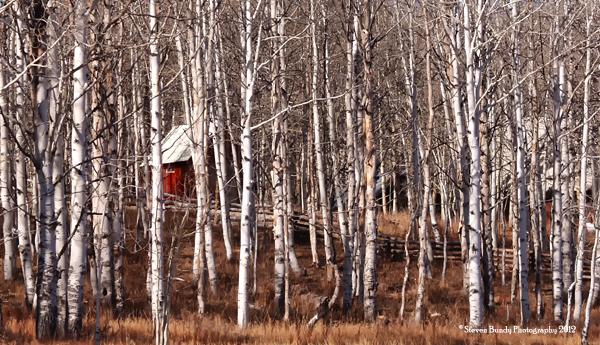 Kolob Cabin, Utah, 2008