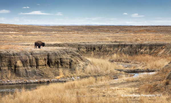 Lone Buffalo – Colfax, NM – 2013