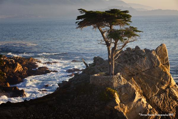Lone Cypress, Carmel, CA  2011