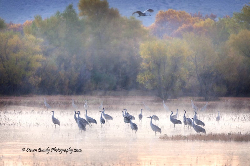 Misty Morning Sandhills  Bosque del Apache Refuge, NM – 2014