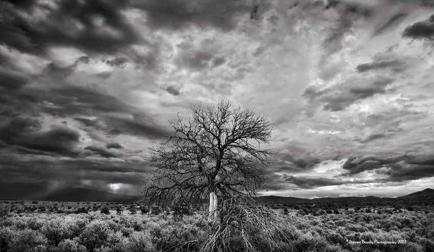 Taos Tree and Storm – Taos, New Mexico, 2011